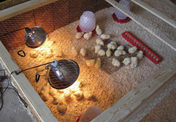 Обогрев для цыплят: лампы и другие приспособления