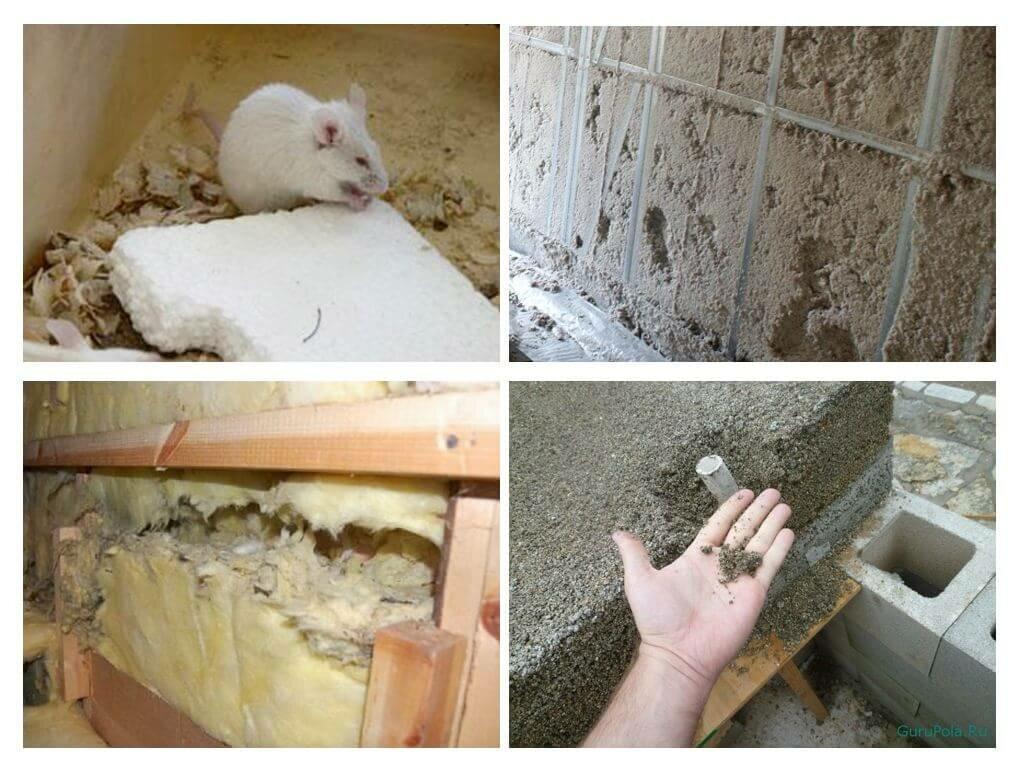 Едят ли мыши пенопласт и что с этим делать
