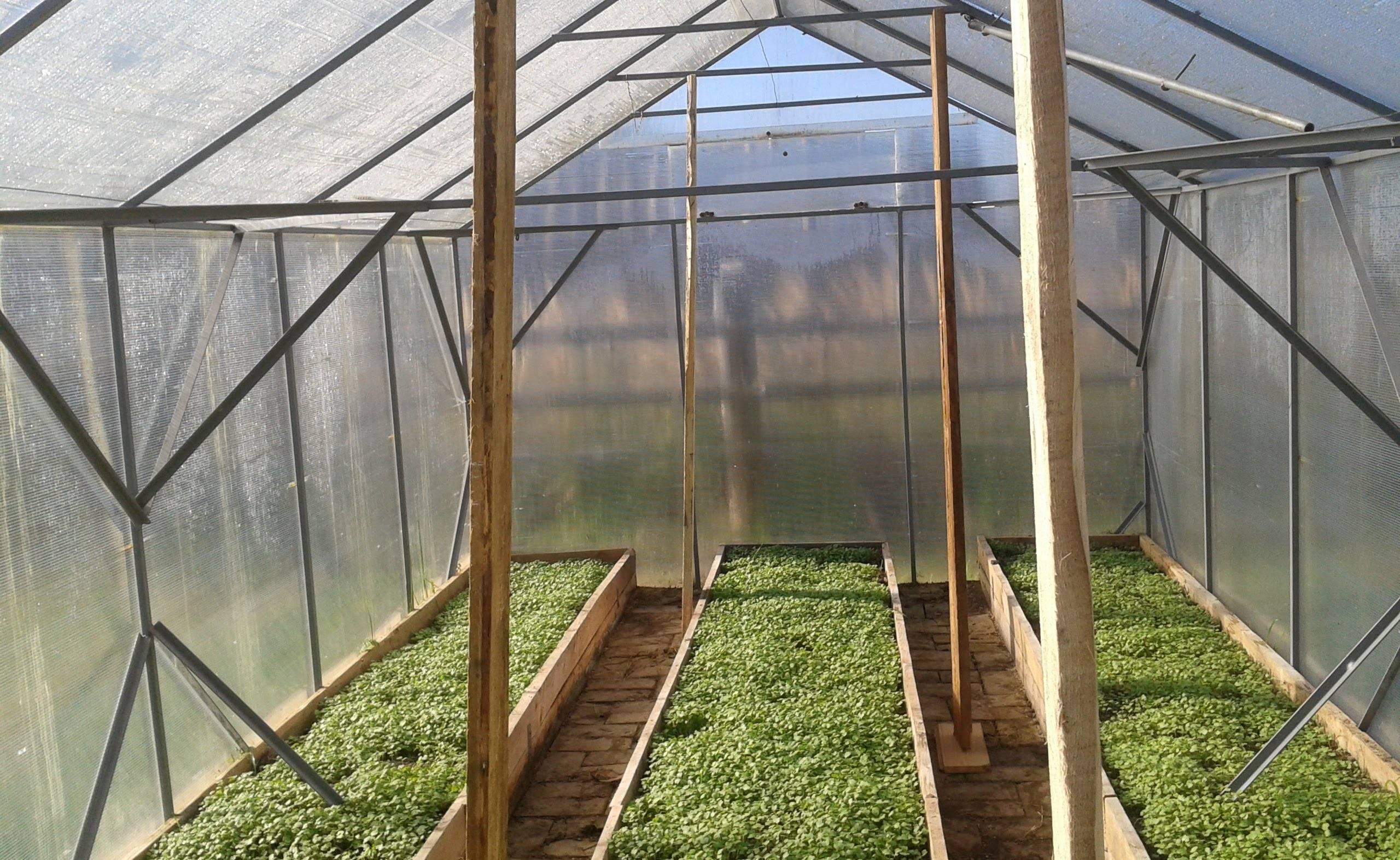 Теплицы для выращивания овощей круглый год - разновидности, инструкции по изготовлению