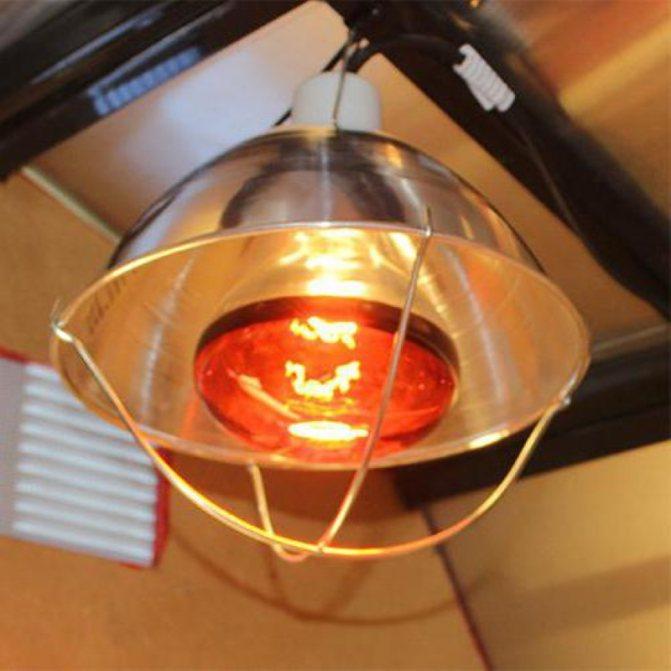 Обогрев курятника зимой: отопление инфракрасными лампами, выбираем обогреватель с терморегулятором, как без электричества сохранить тепло