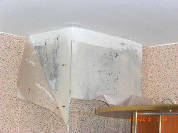 Как утеплить кирпичную стену изнутри или борьба с плесенью в квартире