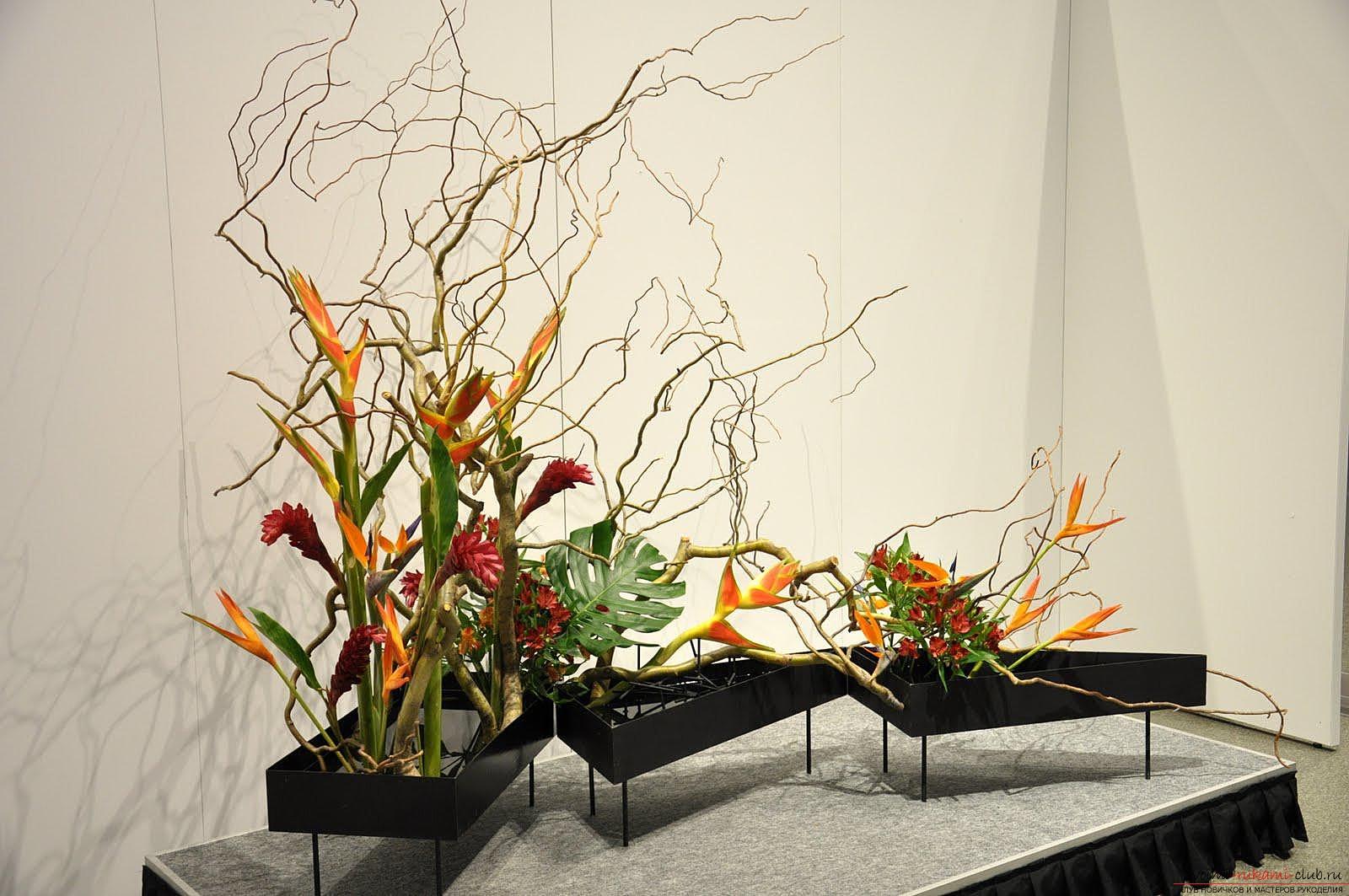 Основы флористики для начинающих