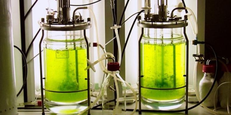 Как получить биодизель своими руками в домашних условиях - energorus.com