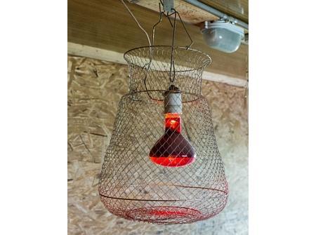 Инфракрасная лампа для обогрева - курятника, теплиц и других помещений, цена