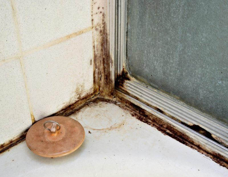 Как убрать плесень в ванной комнате, фото / средство и раствор для обработки поверхностей, видео