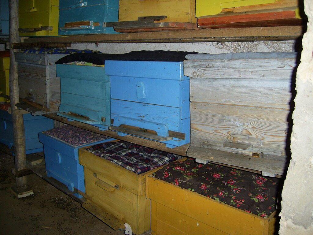 Подготовка пчел к зиме на улице и в помещении: советы