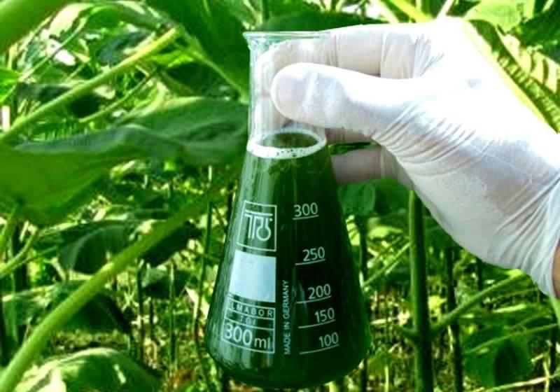 Биотопливо для каминов – основные рекомендации