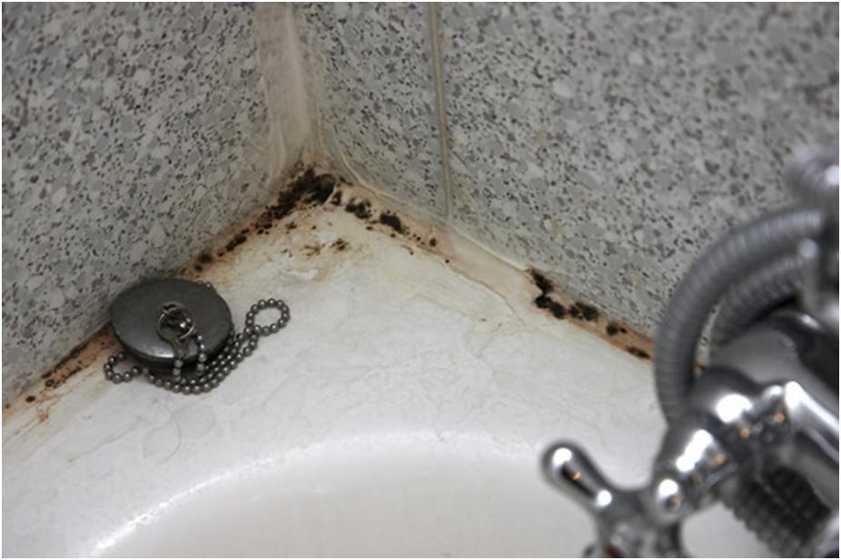 Плесень в ванной: избавляемся от напасти в домашних условиях