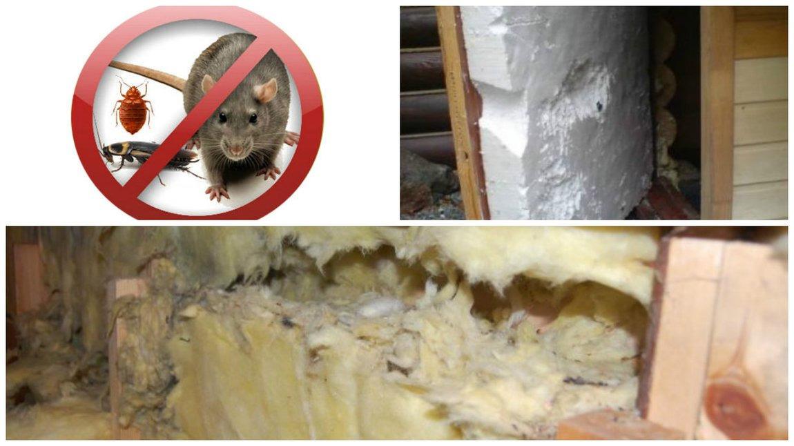 Как защитить пенопласт от мышей и крыс?
