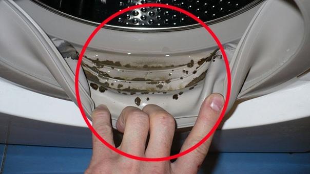 Плесень в стиральной машине: как избавиться и очистить, 10 лучших средств