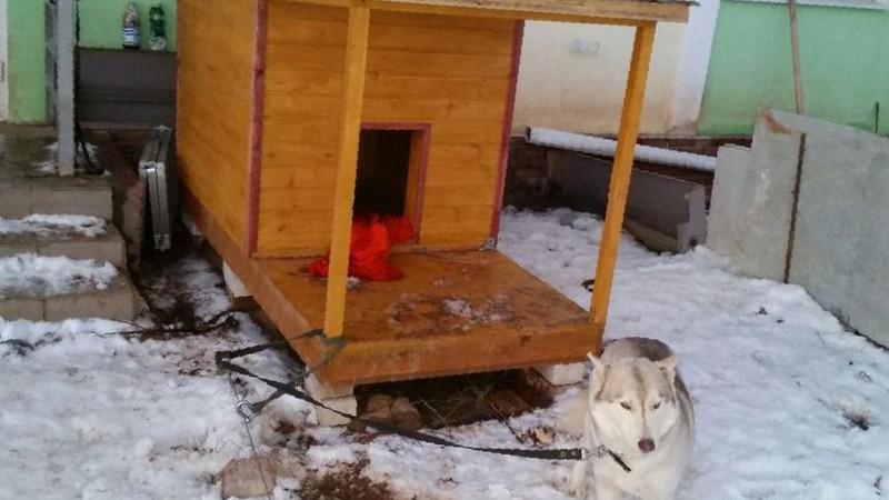 Как утеплить будку для собаки на зиму: выбор материала, пошаговая инструкция по монтажу утеплителя
