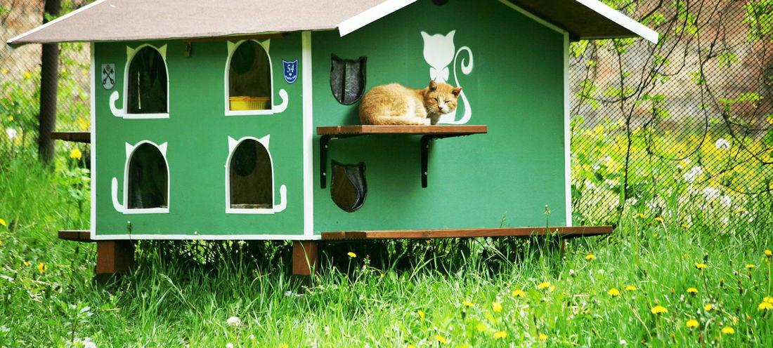 Уличный теплый домик для кошки на зиму: будка своими руками