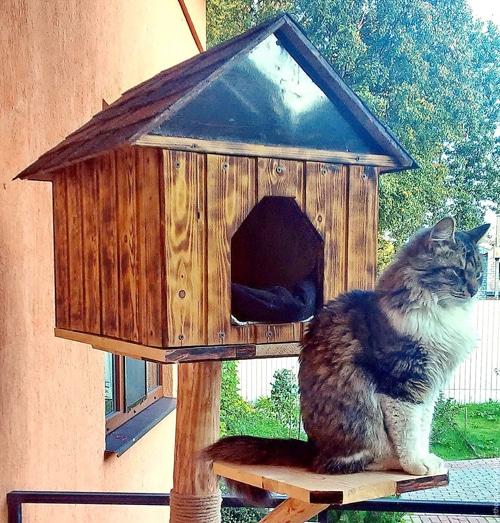 Уличный домик для кошки: как сделать своими руками
