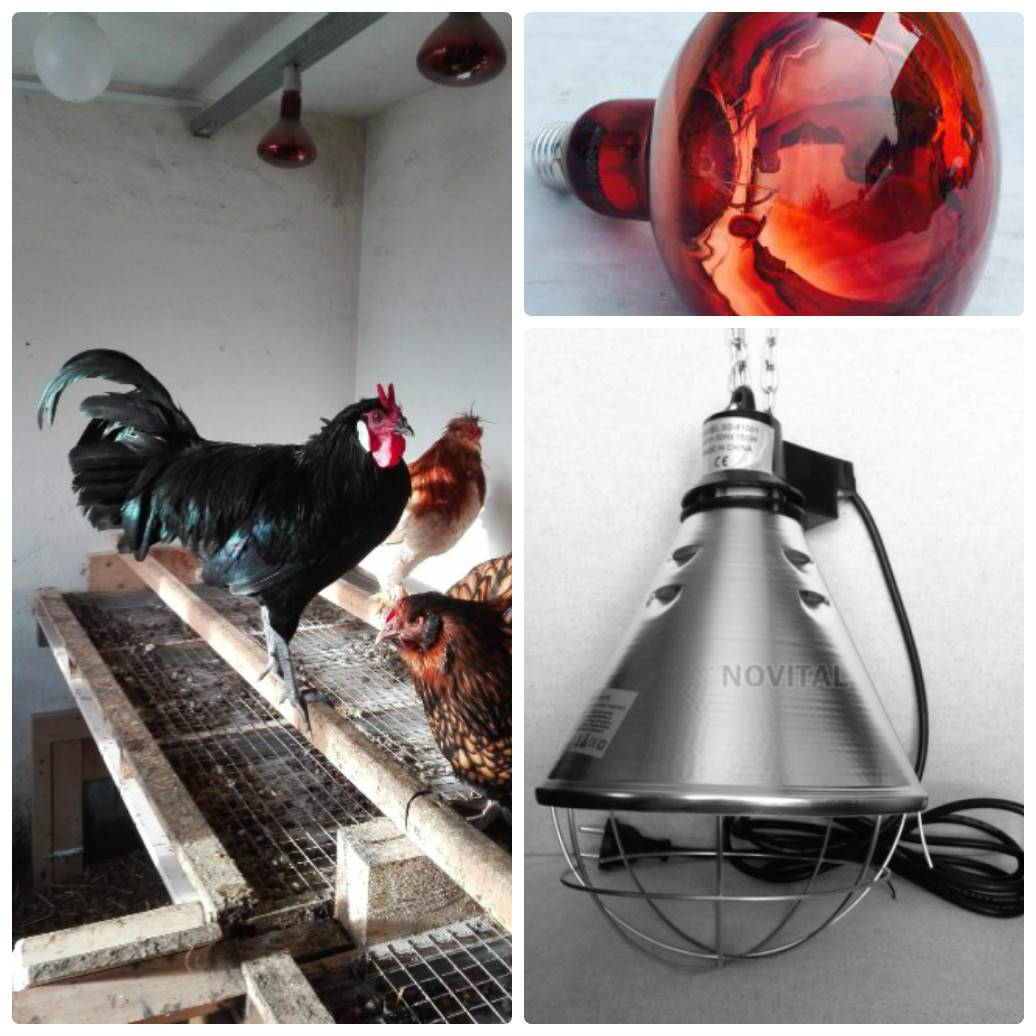 Инфракрасные лампы для обогрева курятника: как выбрать, как установить, плюсы и минусы