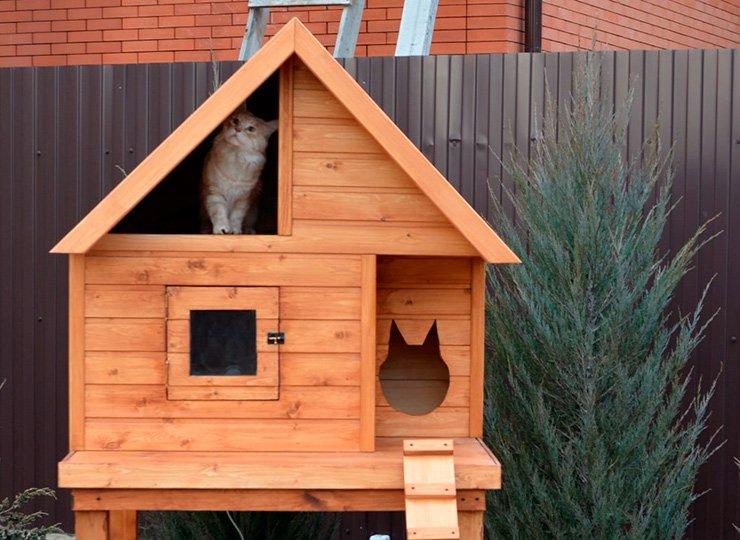 Как сделать домик для кошек на улице и что учесть при изготовлениии?
