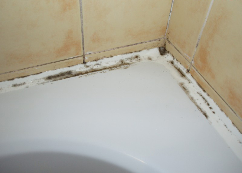 Как снять и удалить черную плесень в ванной   строительные материалы