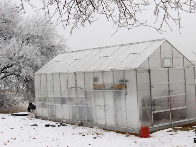 Зимняя теплица своими руками — подробная инструкция с пошаговым руководством. 100 фото, видео, чертежи, схема, лучшие проекты
