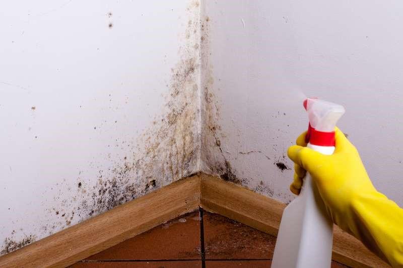 Как убрать грибок в ванной: на стенах, между плитками, на герметике