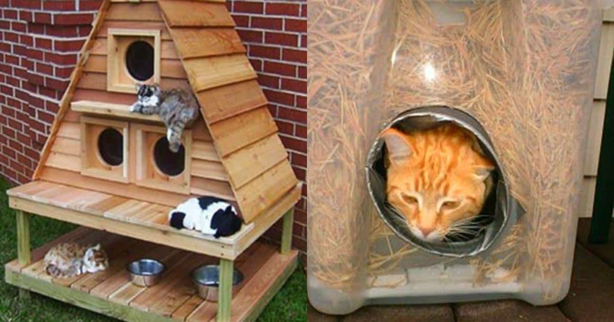 Зимний домик для кошки на улице. уличные домики для кошек: выбор, обустройство и установка