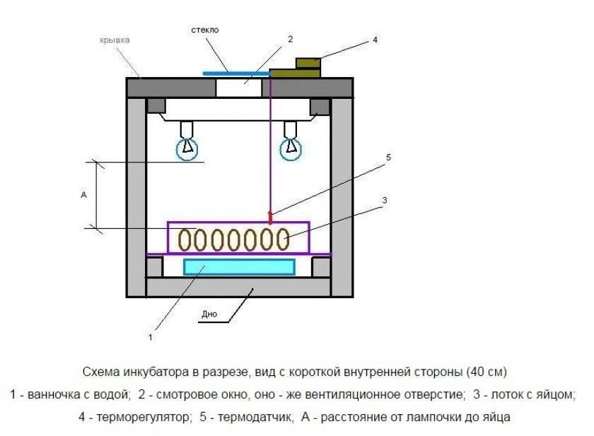 Терморегулятор для инкубатора своими руками: описание схемы простейшей конструкции