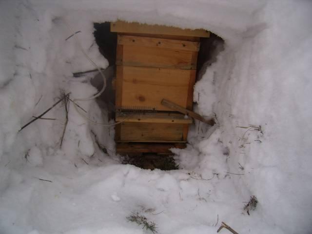 Утепление ульев на зиму: материал, варианты утепления, советы и рекомендации