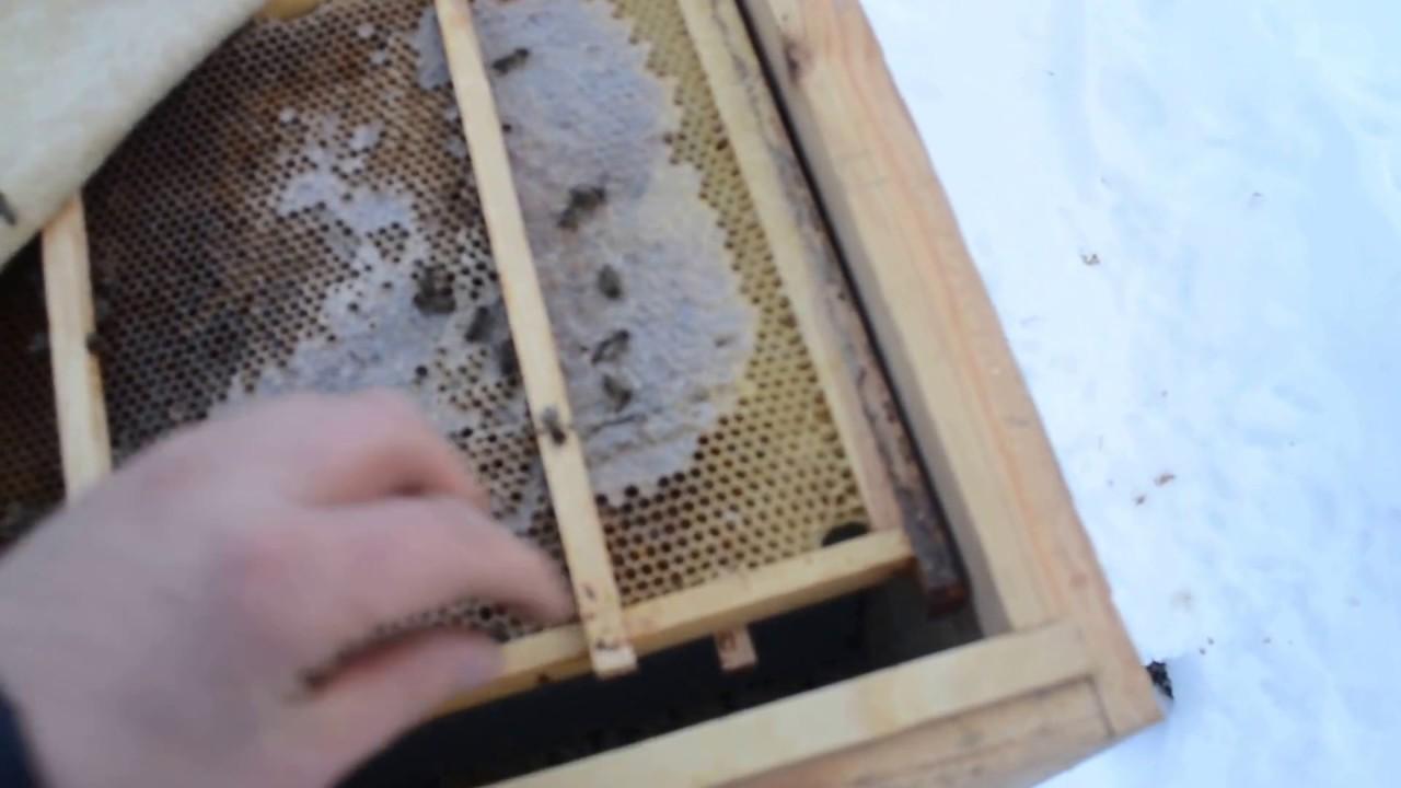 Подготовка пчел к зимовке. сборка гнезда пчел на зиму