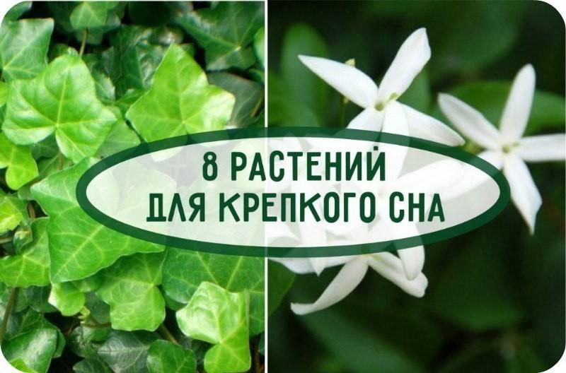 Цветы для спальни: какие полезные комнатные растения подойдут для спальни