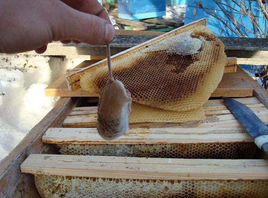 Зимовка пчел на улице: утепление ульев