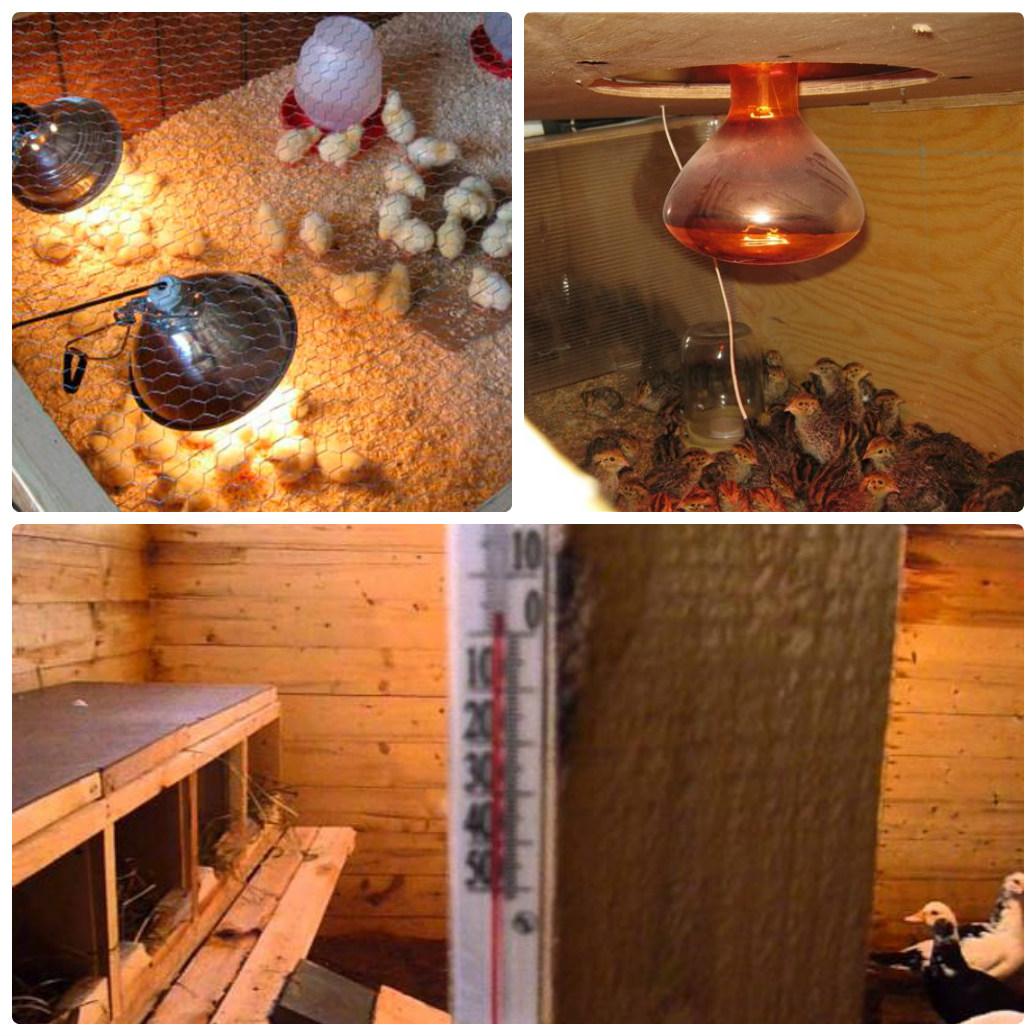 Обогрев курятника зимой: естественные и искуссвенные методы обогрева