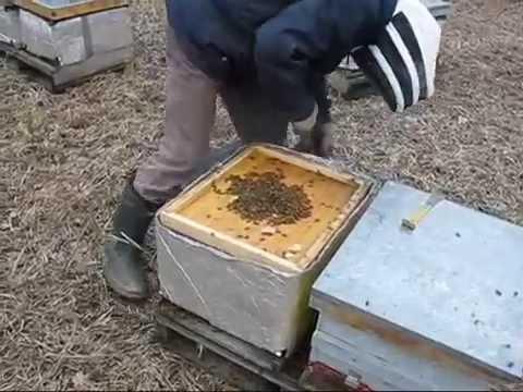 Утепление ульев на зиму материалы и подготовка
