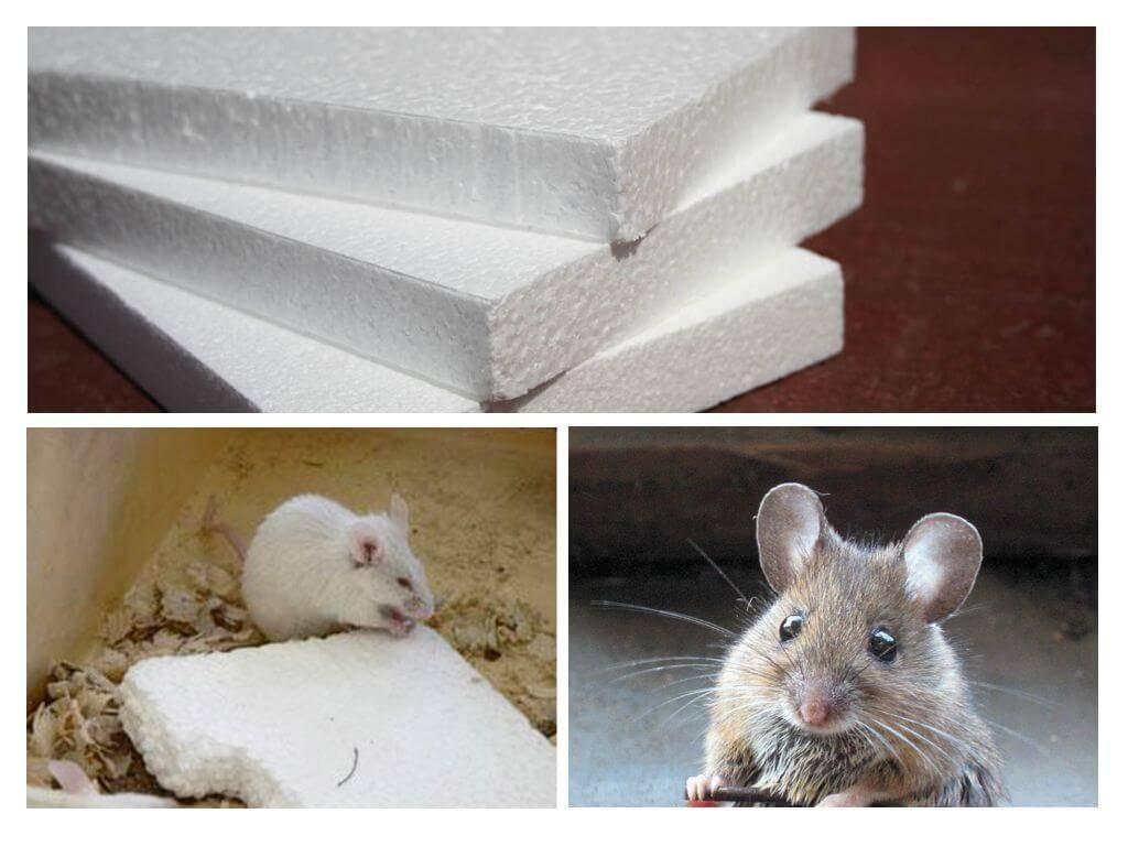 Какой утеплитель не грызут мыши и крысы, как защитить пенопласт от грызунов