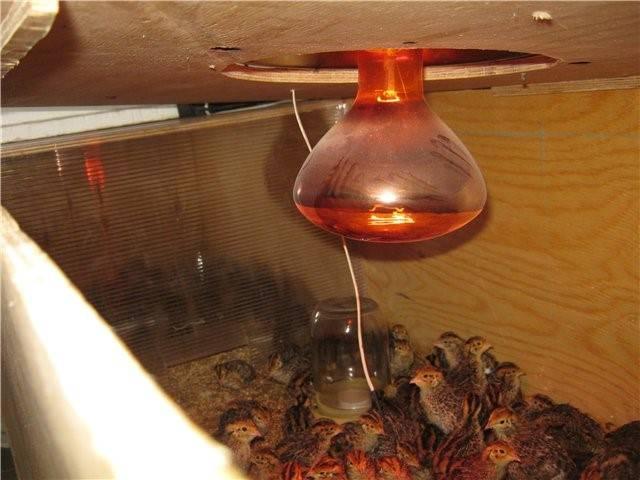 Инфракрасный обогреватель для курятника – виды и характеристика