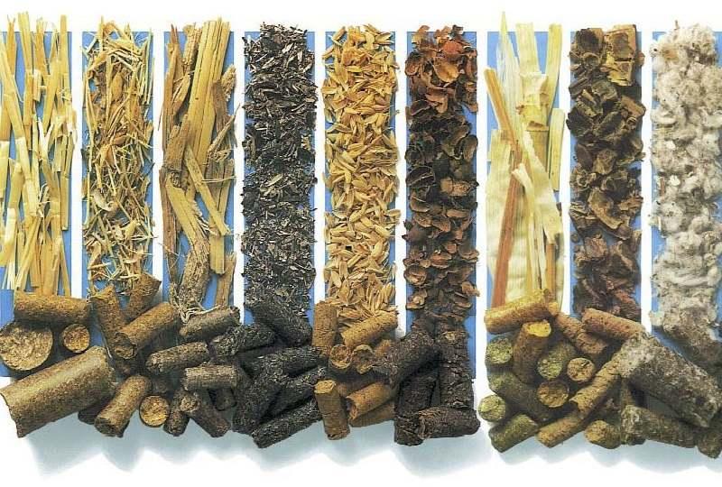 Виды опилок: отличия и характеристики дубовых, березовых, еловых, ольховых, сосновых, буковых и иных лиственных и хвойных пород