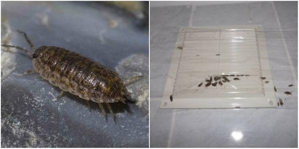 Мокрицы в ванной: как избавиться быстро и надежно / zonavannoi.ru