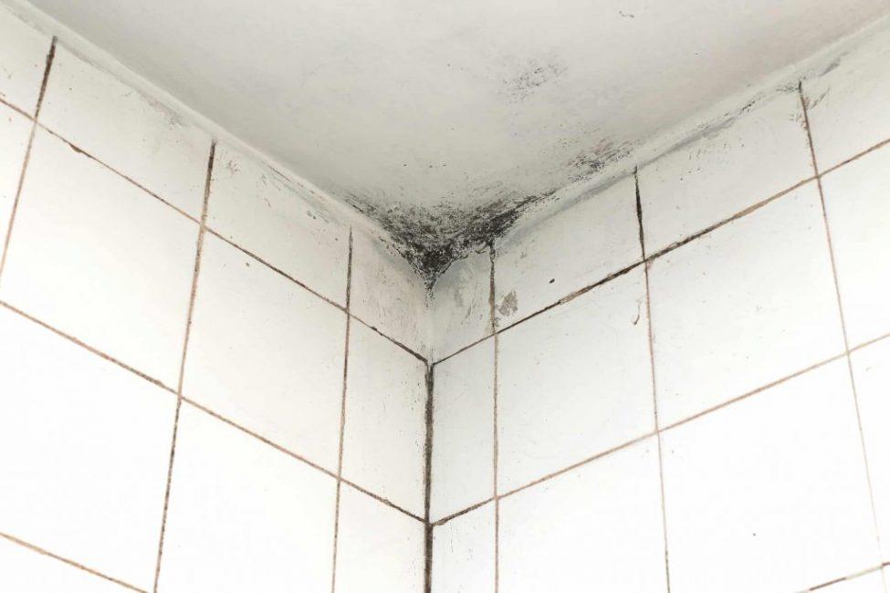 Как избавиться от плесени и удалить грибок в ванной комнате