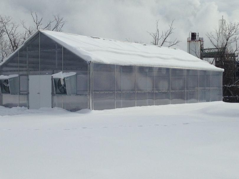 Выращивание овощей в теплице зимой: как оборудовать теплицу и собирать урожай круглый год?