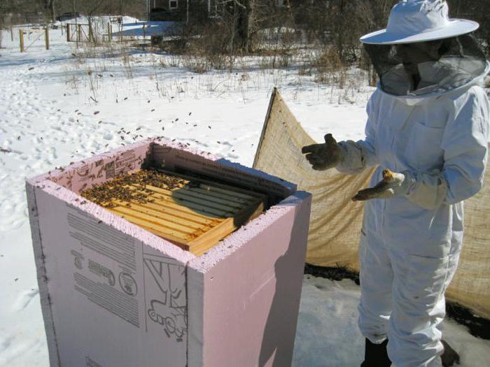 Зимовка пчел: на воле с открытыми летками, в ульях с сетчатым дном