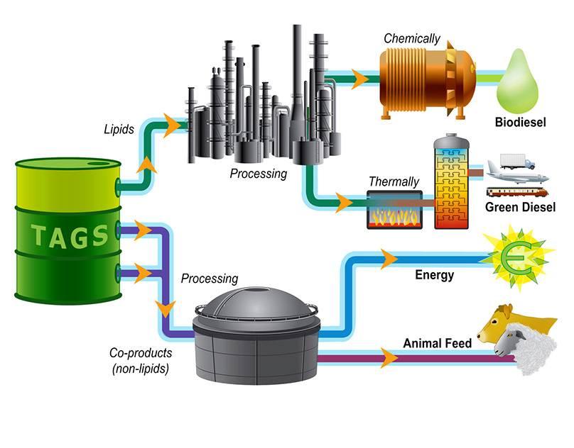 Производство биодизельного топлива, его применение и преимущества