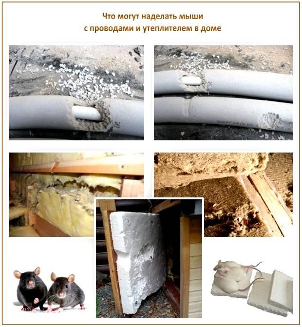 Как защитить утеплитель от грызунов?