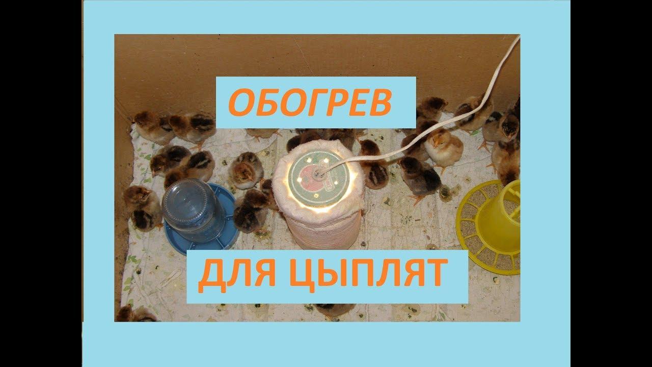 Лучшие варианты лампы для обогрева цыплят, особенности инфракрасной и керамической