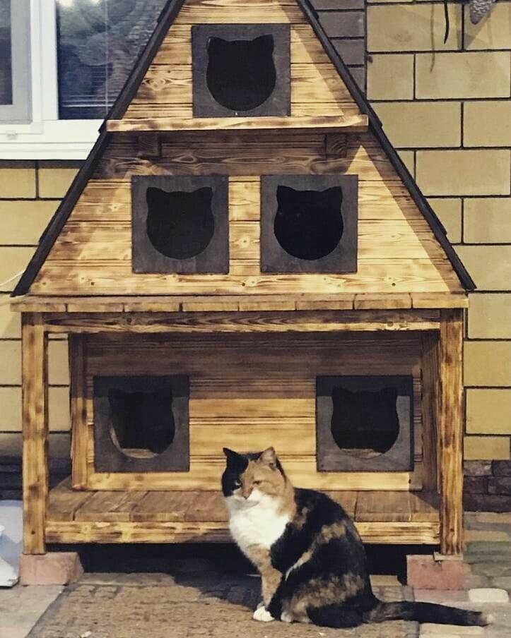 Как помочь перезимовать бездомной кошке на улице — сделать домик для уличной кисы, советы и инструкции