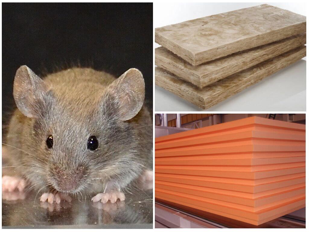 Какой утеплитель не грызут крысы, мыши и другие вредители: обзор материалов для защиты от грызунов
